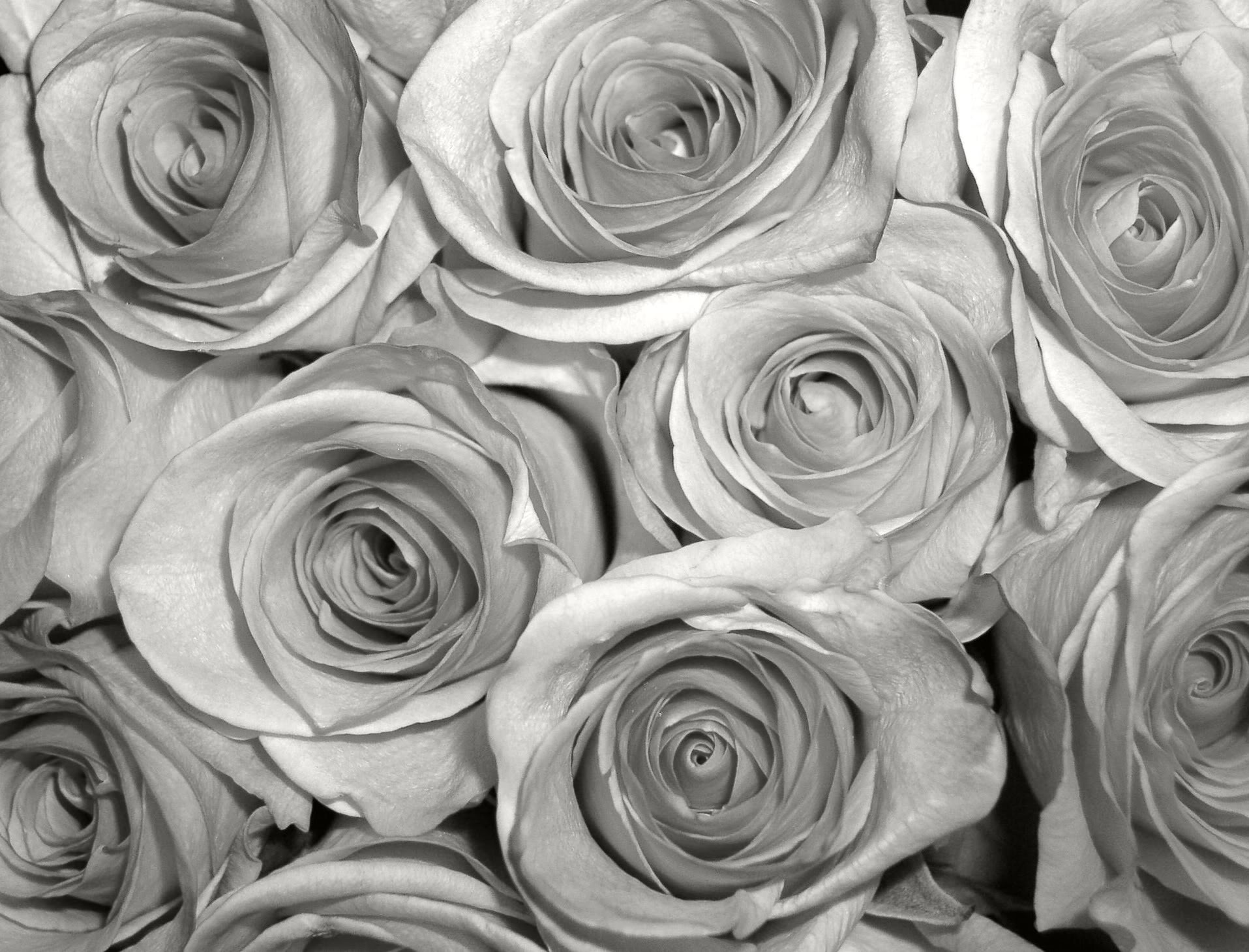 Image Gallery Silver Roses